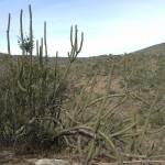 Desierto de Mataral