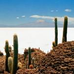 """La más impactante: Isla de los Pescadores. Es difícil de creer que exista una isla en medio de un """"mar"""" de sal. Y para demostrar aún más su originalidad, está a casi 4.000 m de altitud en el salar de Uyuni, llena de cactus gigantes que pueden llegar a medir hasta 12 metros y tienen 1200 años de vida"""