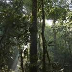 El parque nacional de Madidi es el hogar de más de 6000 especies de plantas, 1.370 especies de vertebrados y 1000 especies de aves
